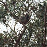 Foto van Hanson Bay Wildlife Sanctuary