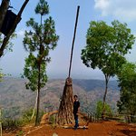 Photo of Pinus Pengger Nature Tourism