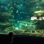 صورة فوتوغرافية لـ Aquarium de Paris - CineAqua
