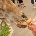 Фотография Aloha Safari Zoo