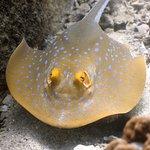 Foto di Coral Grand Divers
