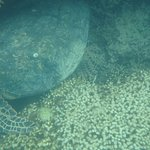 Large turtle we saw in the reef