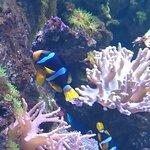 ภาพถ่ายของ Sevastopol Aquarium