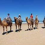 Port Macquarie Camel Safari's Foto