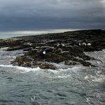 Foto van Serenity Farne Island Boat Tours