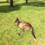Photo of Kangaroo Island Wildlife Park