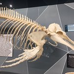 Photo of SKELETONS: Museum of Osteology