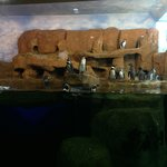 Bild från Aquarium of Veracruz