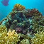 Day 1 Dive 3 Japanese Garden Ko Samae San Pattaya