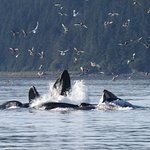 Photo of Hoonah Whale Tours