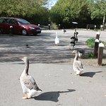 Foto de Branston Water Park