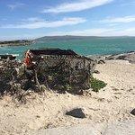 Die Strandloper Foto