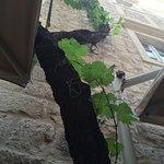 Foto van Stara Loza Rooftop Restaurant