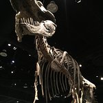 Royal Tyrrell Museum is ten minutes away and worth a visit.