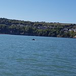 Foto de SeaMor Dolphin Watching Boat Trips