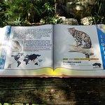 صورة فوتوغرافية لـ ZooTampa at Lowry Park