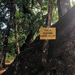 Φωτογραφία: Ujung Kulon National Park