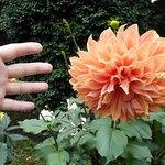 Zdjęcie Jindai Botanical Park