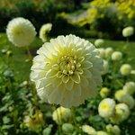 Valokuva: Botanischer Garten Muenchen-Nymphenburg