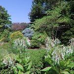 Фотография Luthy Botanical Garden
