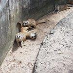 ภาพถ่ายของ สวนสัตว์เปิดเขาเขียว