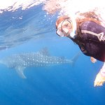 Me with the whale shark