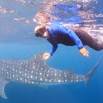 Hubster with the whale shark