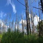 Bilde fra Paynes Prairie