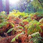 Fotografie: Parque Nacional de Donana