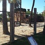 Фотография Zoobotanico Jerez