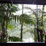 Bilde fra Colo-I-Suva Forest Park