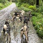Gold Rush Dog Sled Tours resmi