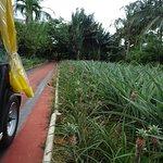 Photo of Nago Pineapple Park