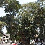 Bilde fra Malang City Square