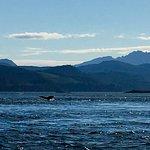 Foto van Sea Wolf Adventures