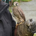 Foto van Falconry Experience Wales