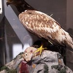 Φωτογραφία: Μουσείο Φυσικής Ιστορίας & Μουσείο Μανιταριών
