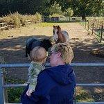 Foto de Bluebell's Dairy
