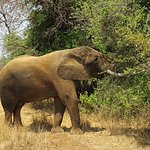 Great to get close to elephants