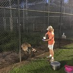 Photo of Catty Shack Ranch Wildlife Sanctuary