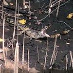 Foto Solar Whisper Daintree River Wildlife Cruises