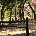 Photo of Estrada Parque do Pantanal
