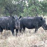 Rhino River Camp-bild