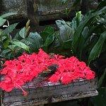 Photo of Kuala Lumpur Butterfly Park
