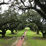 Foto di Oak Alley Plantation