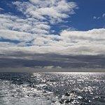 Photo de Mermaid Pleasure Trips