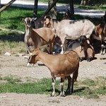 Photo of Agriturismo Fattoria di Cignano