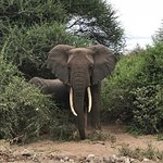 A glimpse into what to expect while on the safari at Lake Manyara