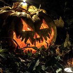 The Haunted Hallows Ghost Walk