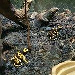 Foto de Lakes Aquarium